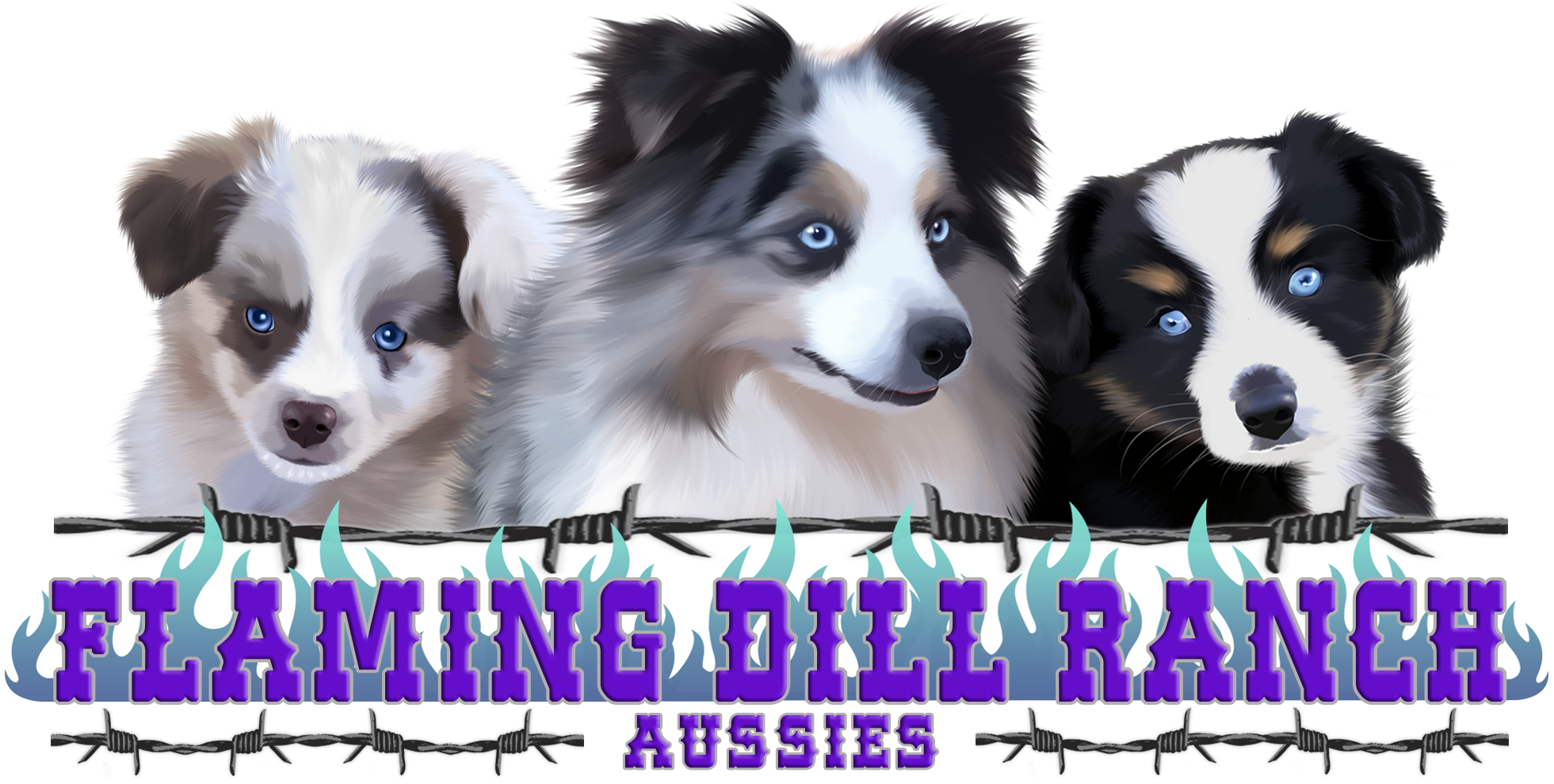 Flaming Dill Ranch Aussies
