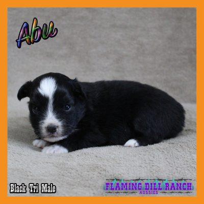Abu 8