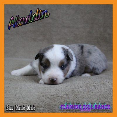 Aladdin 8