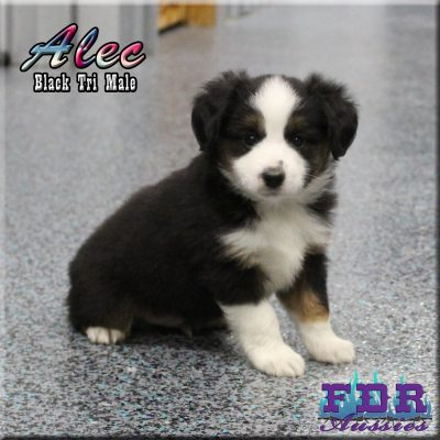 Alec 10