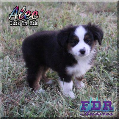 Alec 12