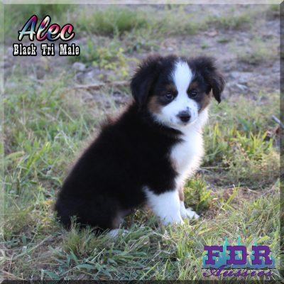 Alec 17