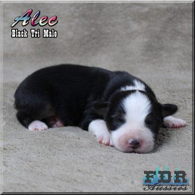 Alec 3
