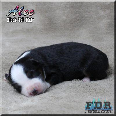 Alec 4