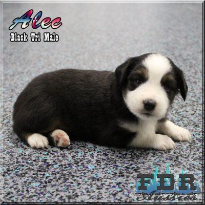 Alec 5