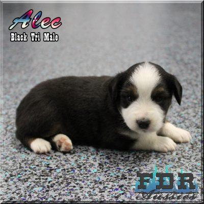 Alec 7