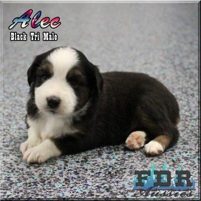 Alec 8