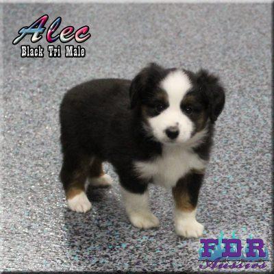 Alec 9