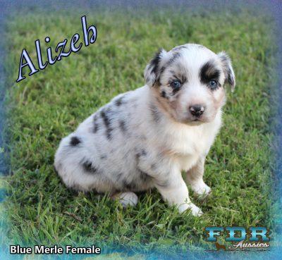 Alizeh