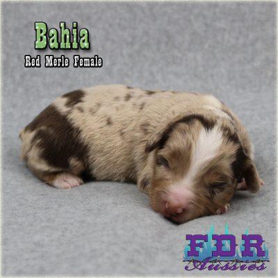Bahia 2