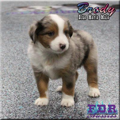 Brody 11
