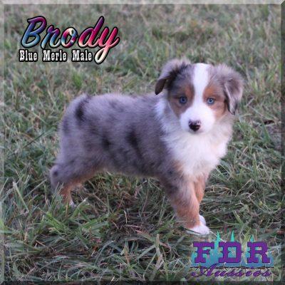 Brody 13