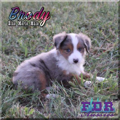 Brody 14