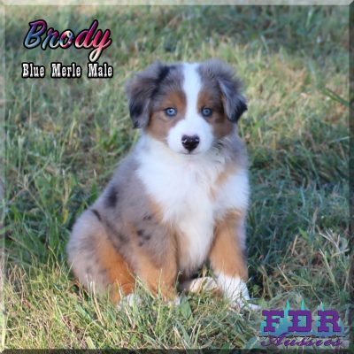 Brody 16