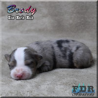 Brody 2