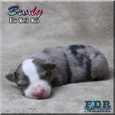 Brody 4