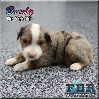 Brody 5