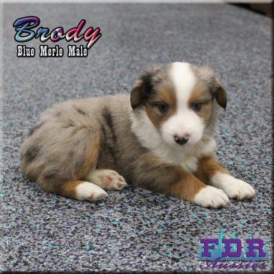 Brody 9