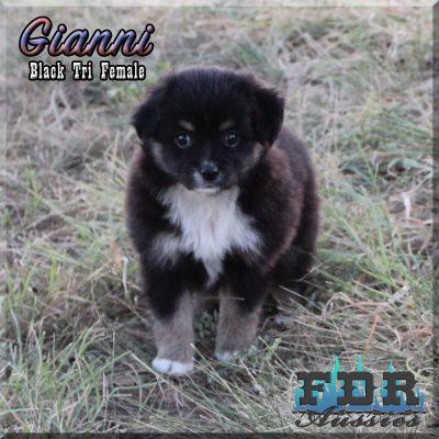 Gianni 10