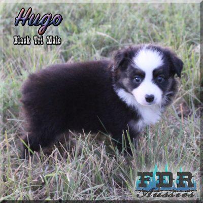Hugo 10