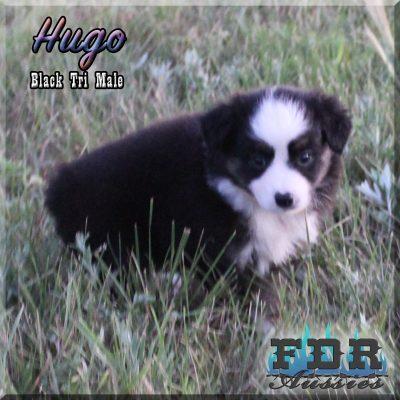 Hugo 11