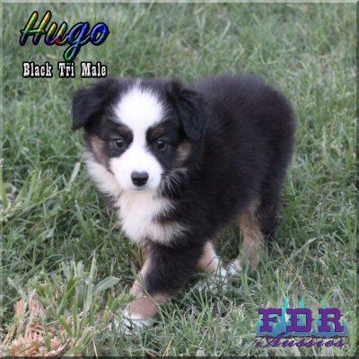 Hugo 12