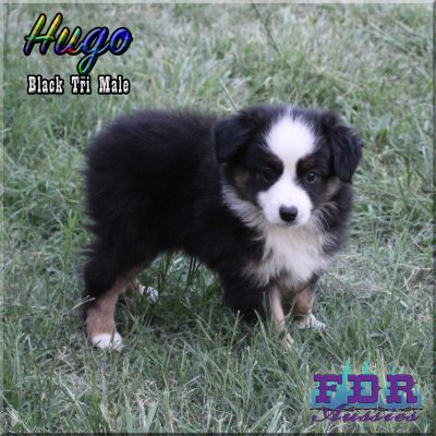 Hugo 14