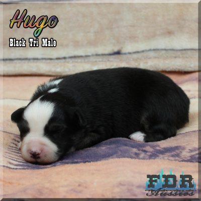 Hugo 4