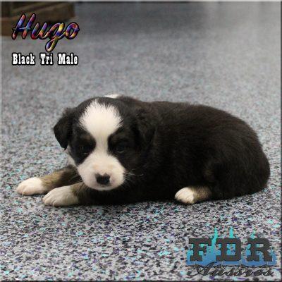 Hugo 6