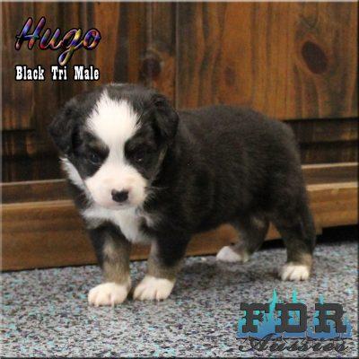 Hugo 7