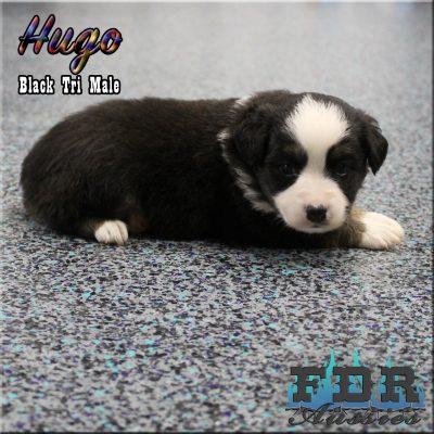 Hugo 8