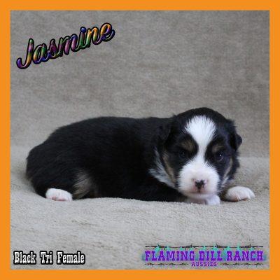 Jasmine 6