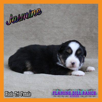 Jasmine 8