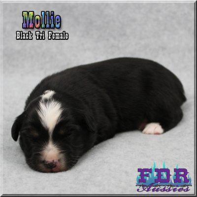 Mollie 1
