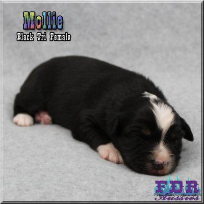 Mollie 2