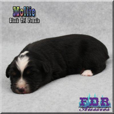 Mollie 3