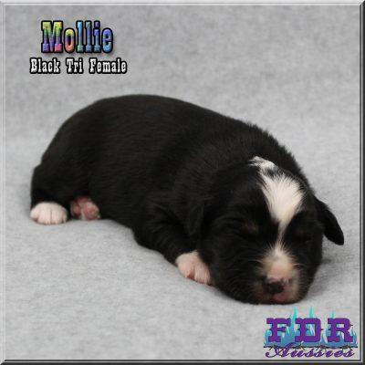 Mollie 4