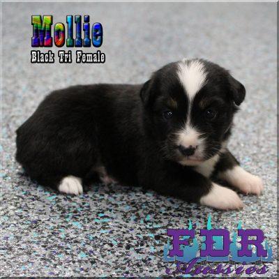 Mollie 5