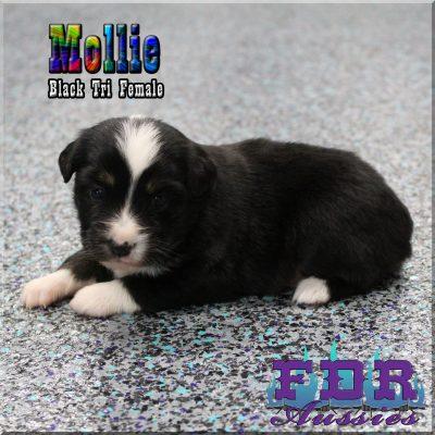 Mollie 6
