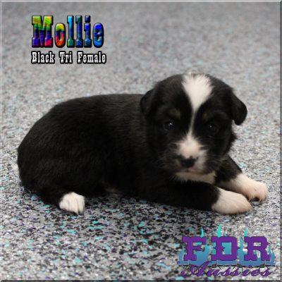 Mollie 7
