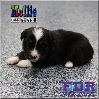 Mollie 8