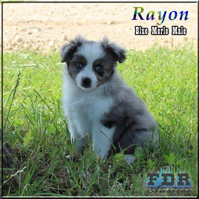 Rayon 15