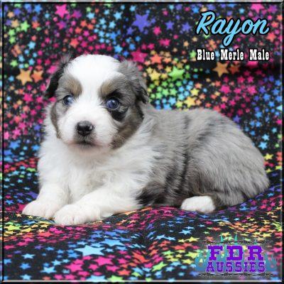 Rayon 8
