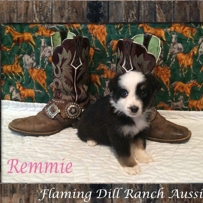Remmie