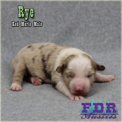 Rye 1