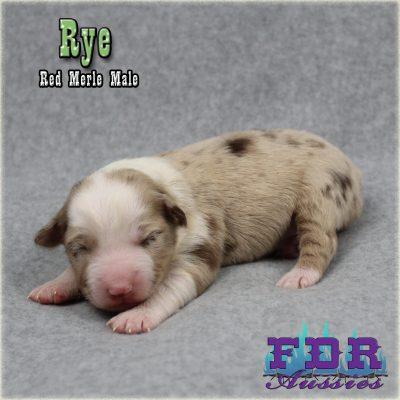 Rye 2