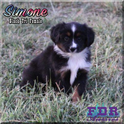 Simone 12