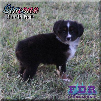 Simone 13
