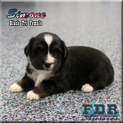 Simone 5