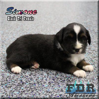 Simone 8